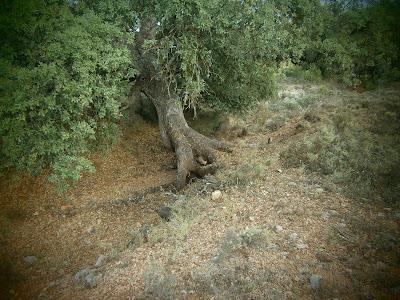 Garduñas en la Serranía de Cuenca. Autor: Miguel Alejandro Castillo Moya