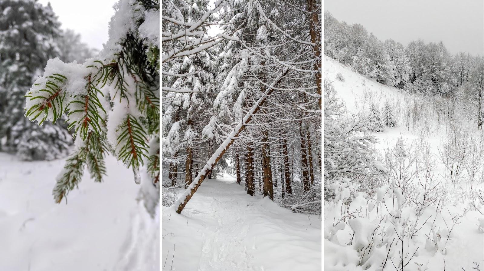 crêt, chalam, randonnée, raquettes, parc, jura, neige