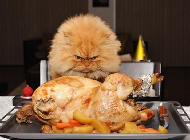 Angry Thanksgiving Cat Picture