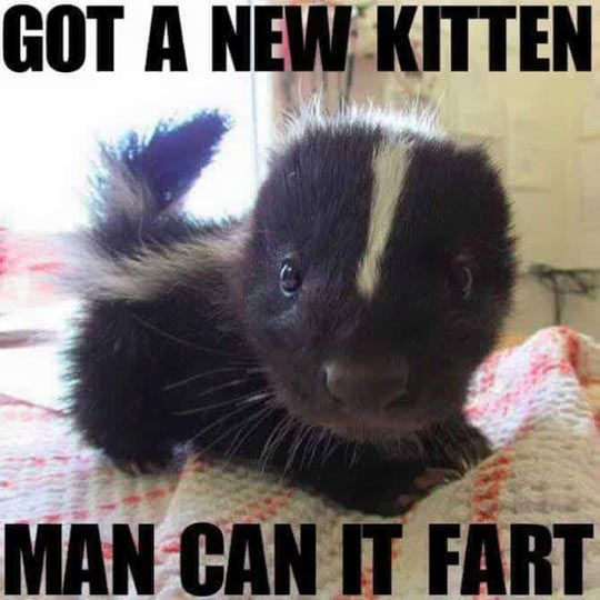 Funny Farting Kitten picture