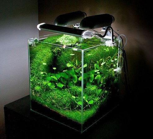 Aquascape Mini dengan Lampu