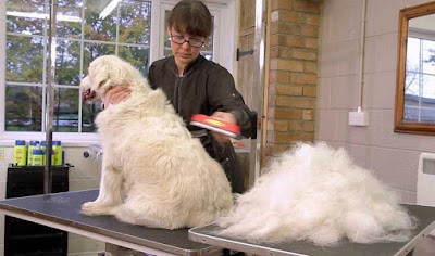 excessive shedding in dog