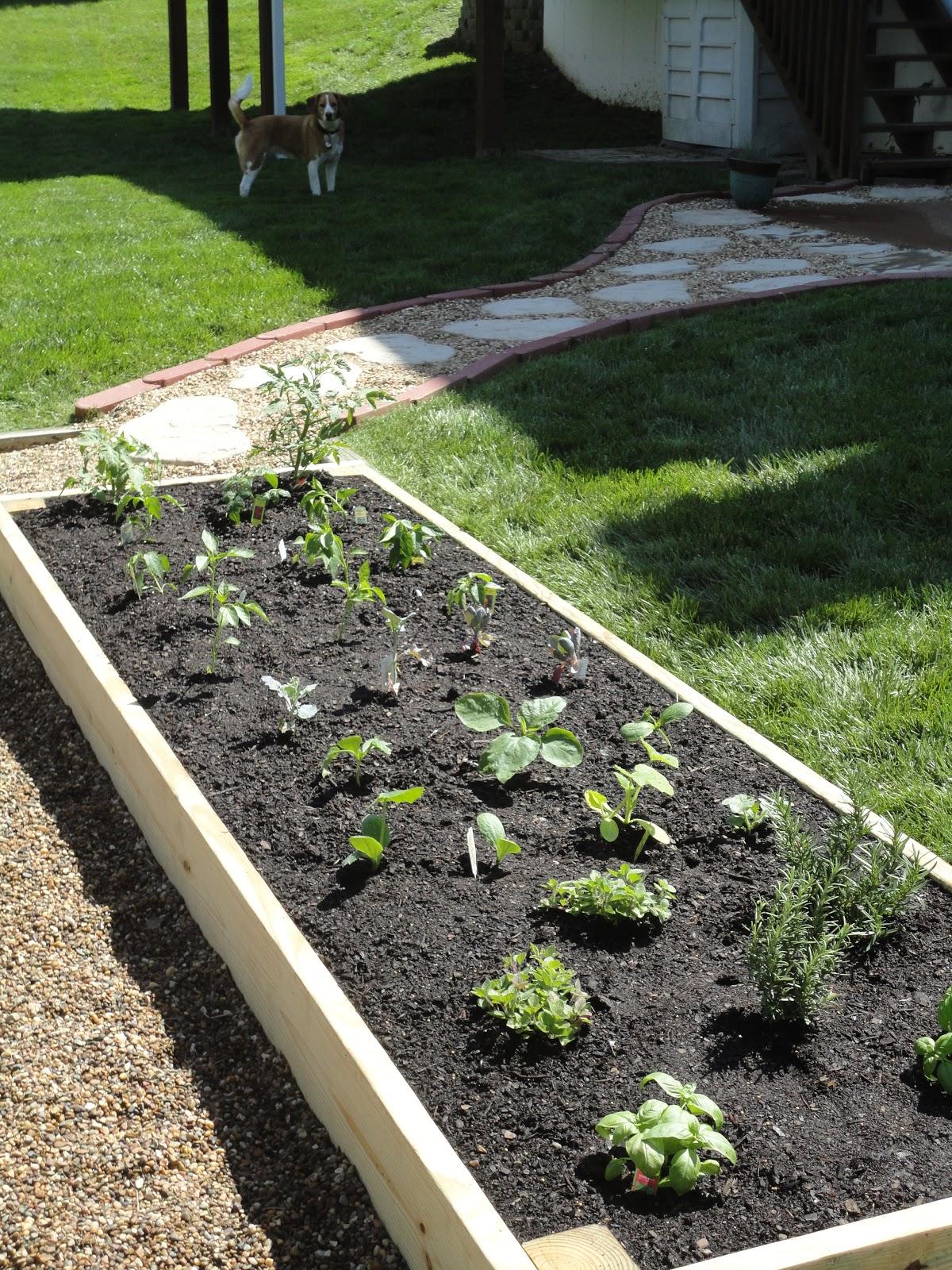 Gardens Raised: Vanilla Bean: DIY Raised Garden Bed