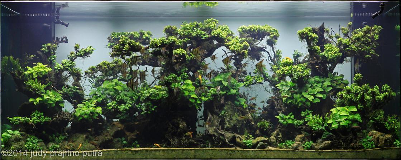 Một hồ thủy sinh sử dụng nhiều loại ráy có kích cỡ khác nhau