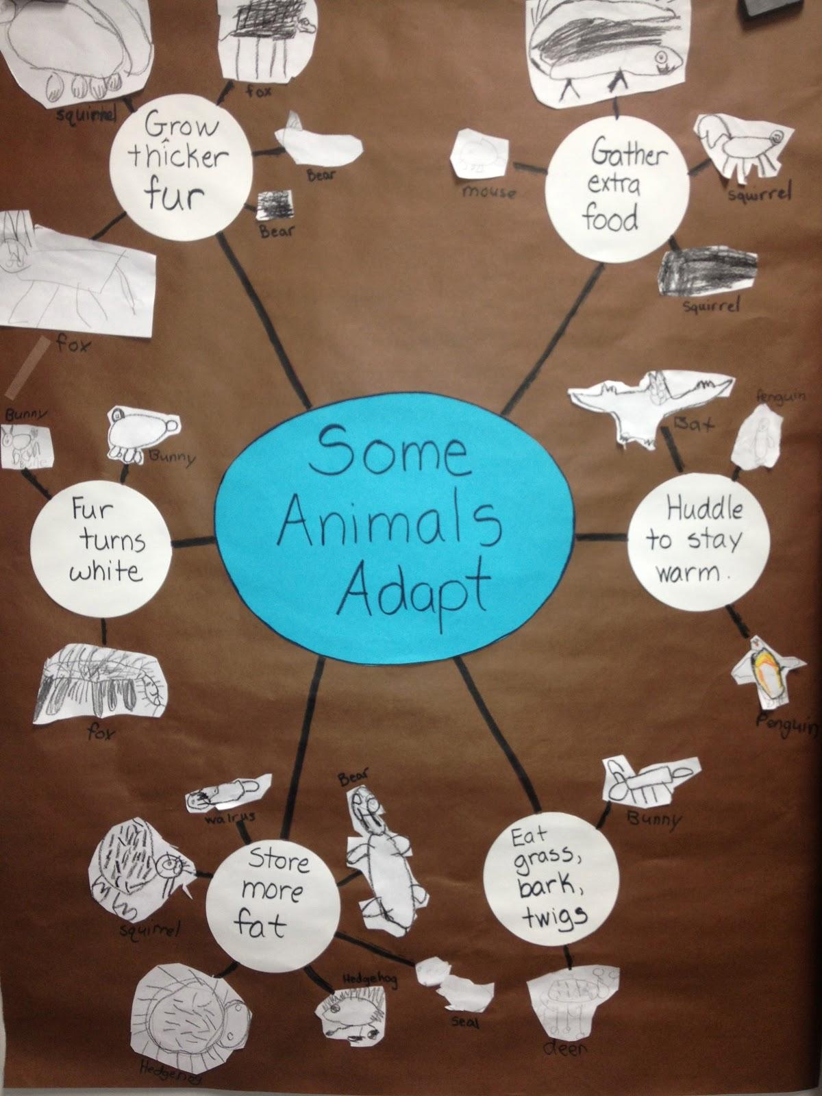 Inquiring Minds Mrs Myers Kindergarten Animals In