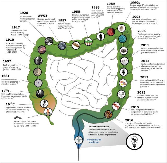 Парадокс микробиома.