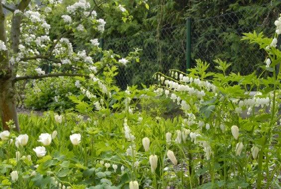 Biały ogród przydomowy w Pradze