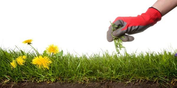 Tips Merawat Taman dan Halaman Rumah Minimalis