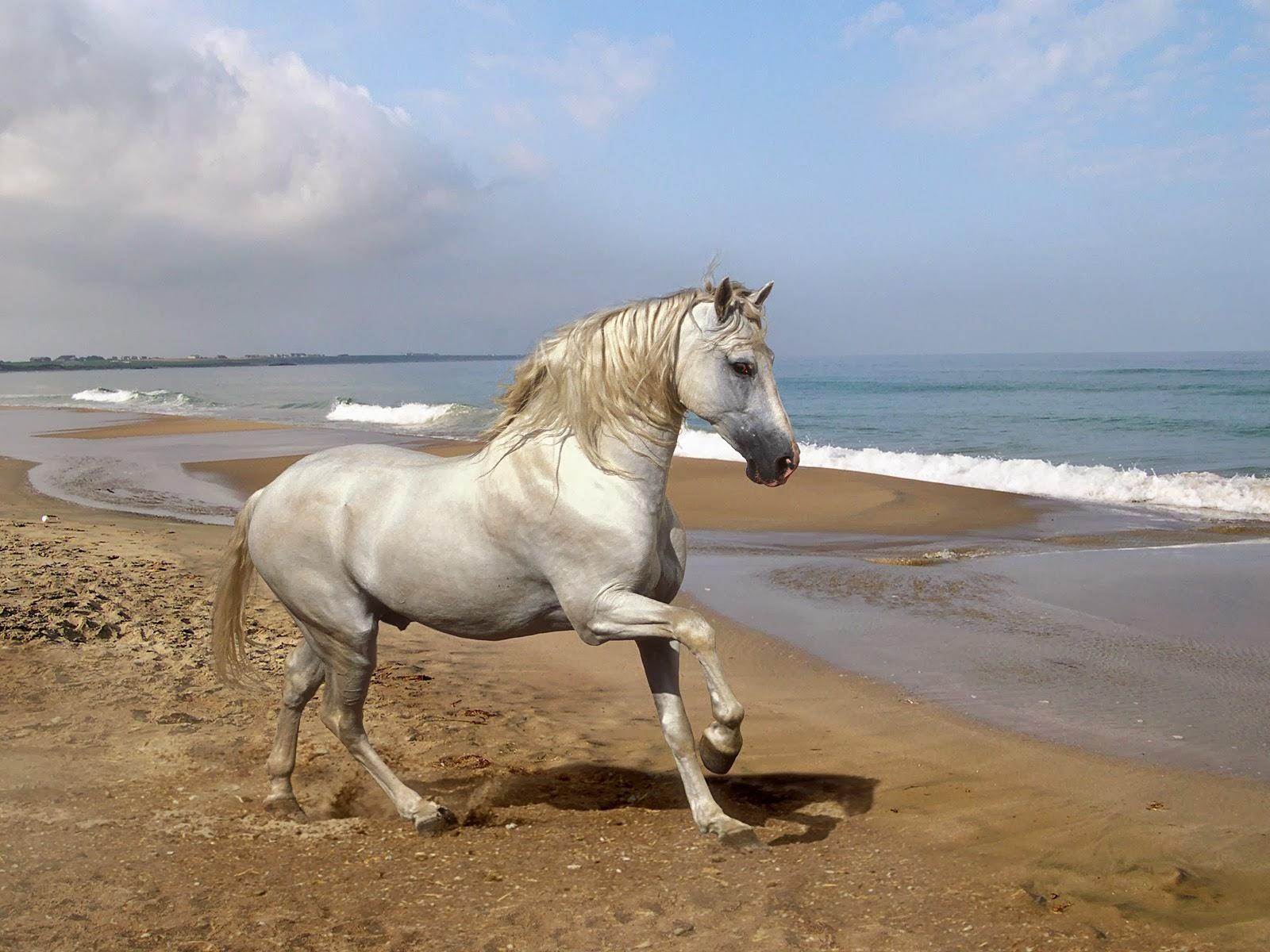 Most Inspiring   Wallpaper Horse Summer - Beautiful+Animal+Horse+Wallpapers+HD+%25286%2529  Gallery_974451.jpg