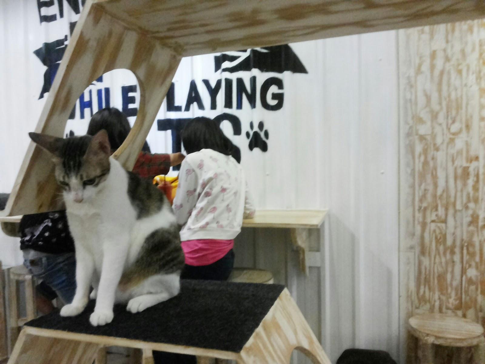 Cat And Coffe Jogja Tempatnya Para Pecinta Kucing PERGIPEDIA