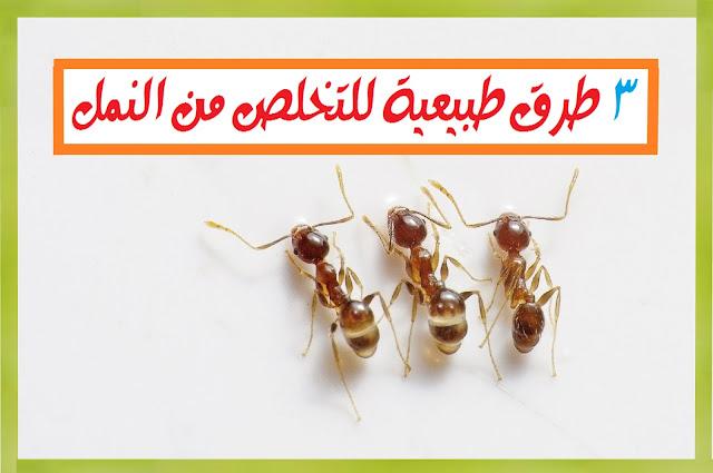 3 طرق طبيعية من أجل التخلص من النمل