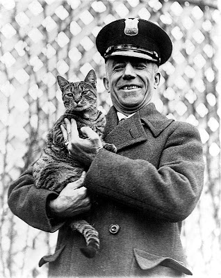 Tige the White House cat