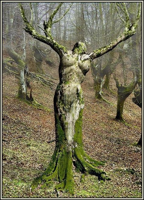 de grands r ves partager le symbole de l 39 arbre dans les r ves. Black Bedroom Furniture Sets. Home Design Ideas