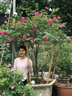 hoa hồng thân gỗ cổ sapa