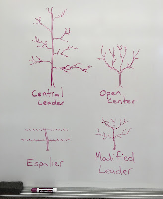 Four Forms of Pruning