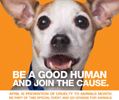 April is Prevention of Animal Cruelty Month