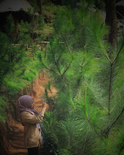 hutan pinus, jogja,spot foto, baru, keren, rute