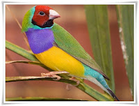 Finch Bird Animal Pictures