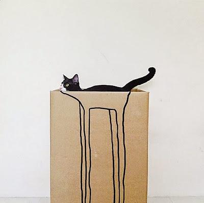gato imagen chistosa