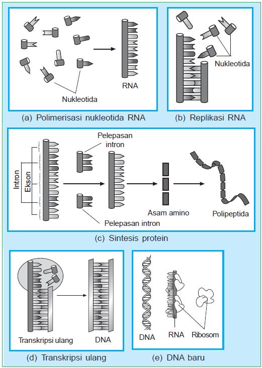 gambar sistem genetik