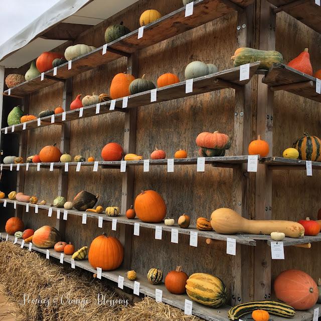A Pumpkin Festival