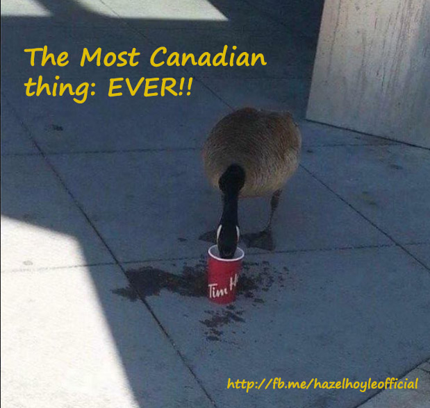 most+canadian+goose+ever.jpg