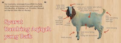 Jasa Aqiqah_Bekasi Barat_Syarat hewan