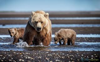 Foto beruang dan anak-anaknya