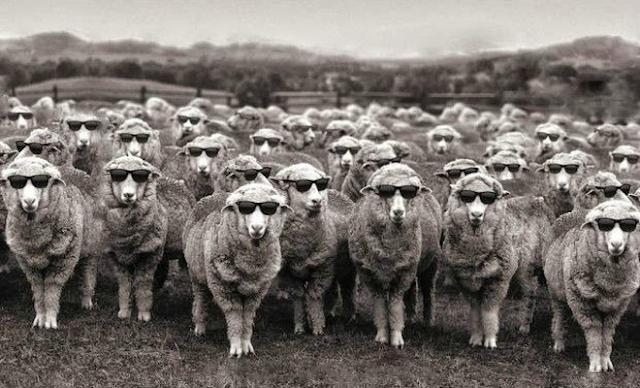 Οι ψηφοφόροι δεν είναι χαζοί, και σίγουρα δεν είναι πρόβατα