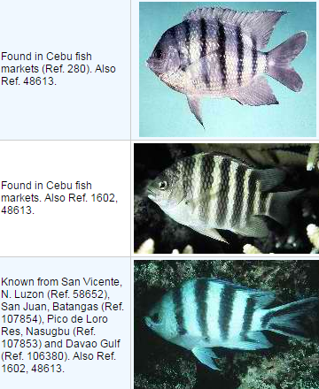 List of Commercial Fish in the Philippines