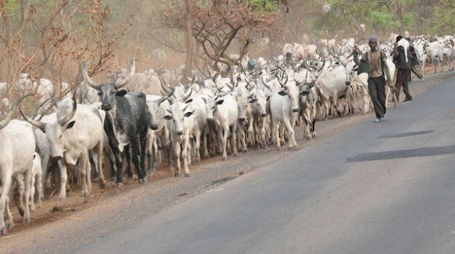 'Where do we go outside Ekiti?' say herdsmen as they beg Fayose