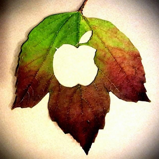 Apple Logo Kesilmiş biçilmiş oyulmuş yaprak serisi fotoğrafları
