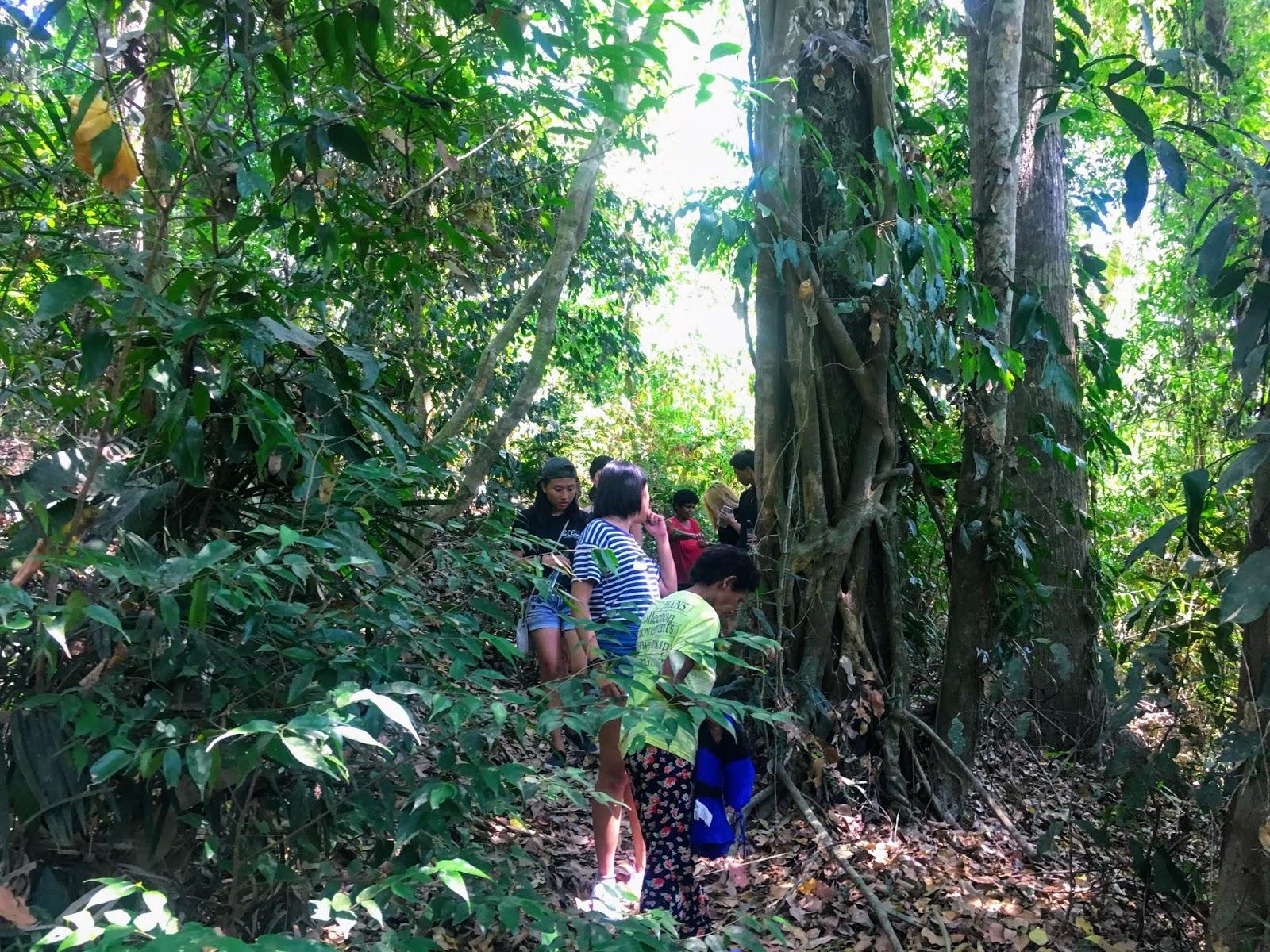 pamulaklakin forest trail 2019