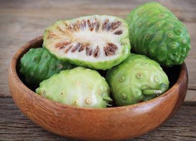 Bisnis Mengkudu Sebagai Obat Dan Terapi Tradisional Herbal