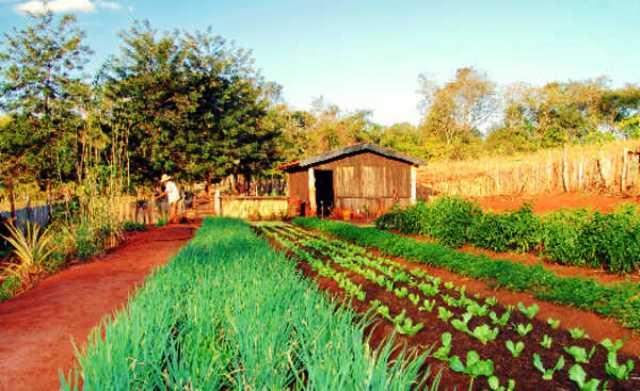 Cooperativas baianas já podem acessar linha de crédito para a agricultura familiar