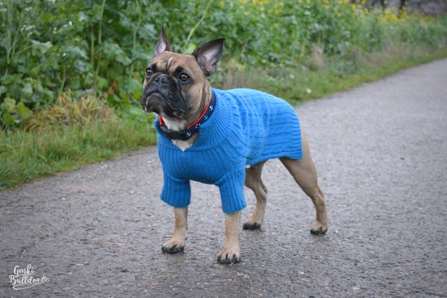 Hundepullover Französische Bulldogge SkinkyG