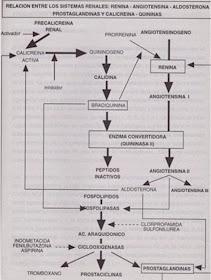 Presión arterial 141/91 embarazadas