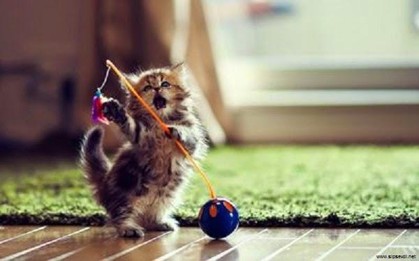 Super Cute Baby Cats Wallpaper Chaton Qui Joue Fond D 233 Cran Photo De Chat