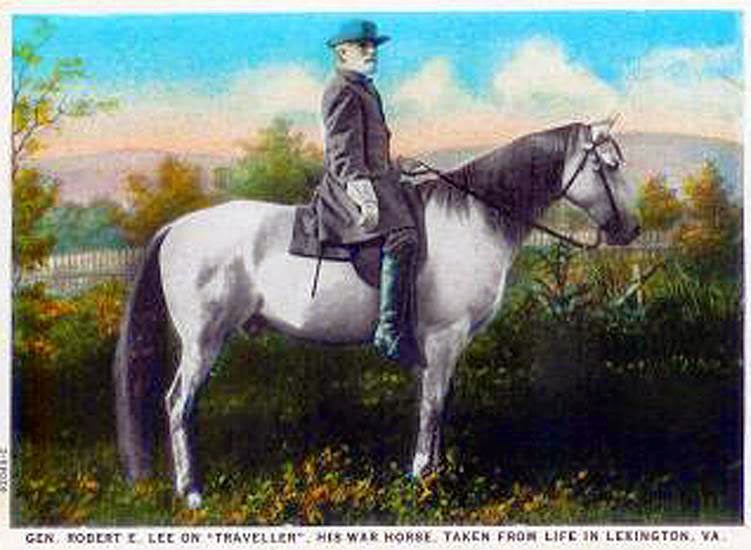 Remembering Horses That Served Their Country
