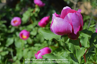 flores bellas, jardinería, jardines, paisajismo, diseño de jardines