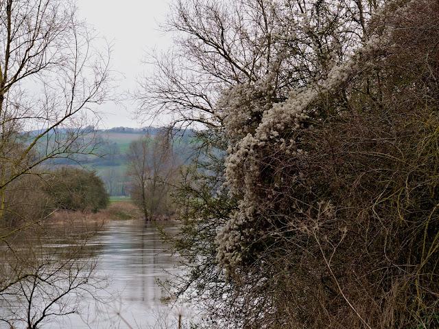Bäume und Büsche am Weserufer