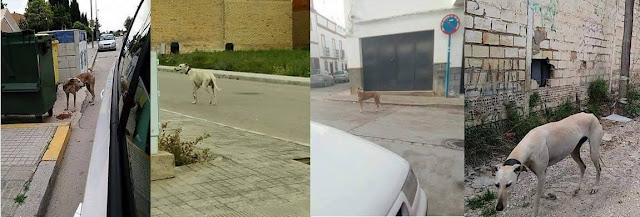¡Ayuda! Nuevo macro rescate de perros en Andalucía