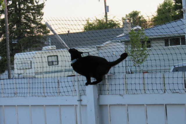 Cat Fence Made From Pvc Pipe