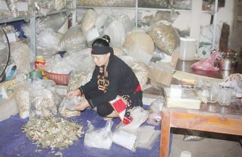 Lương y Triệu Thị Bình đang bốc thuốc