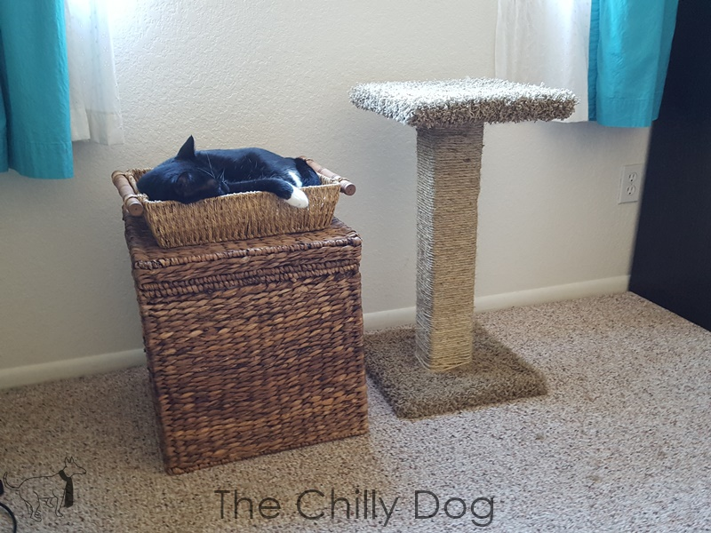 tutorial sisal scratching post the chilly dog. Black Bedroom Furniture Sets. Home Design Ideas