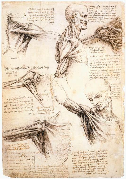 Anatomical studies of the shoulder - WGA12824