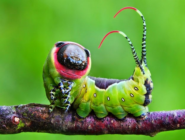 how-a-caterpillar-becomes-a-butterfly-1