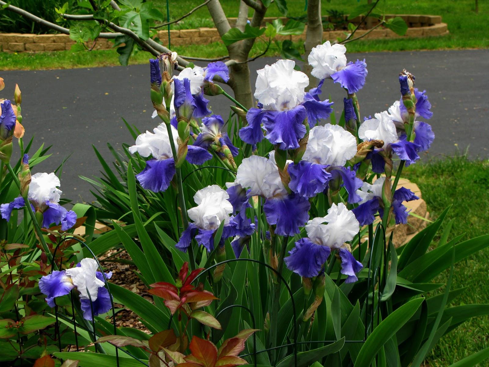 Iris Day Spa Burnaby Bc