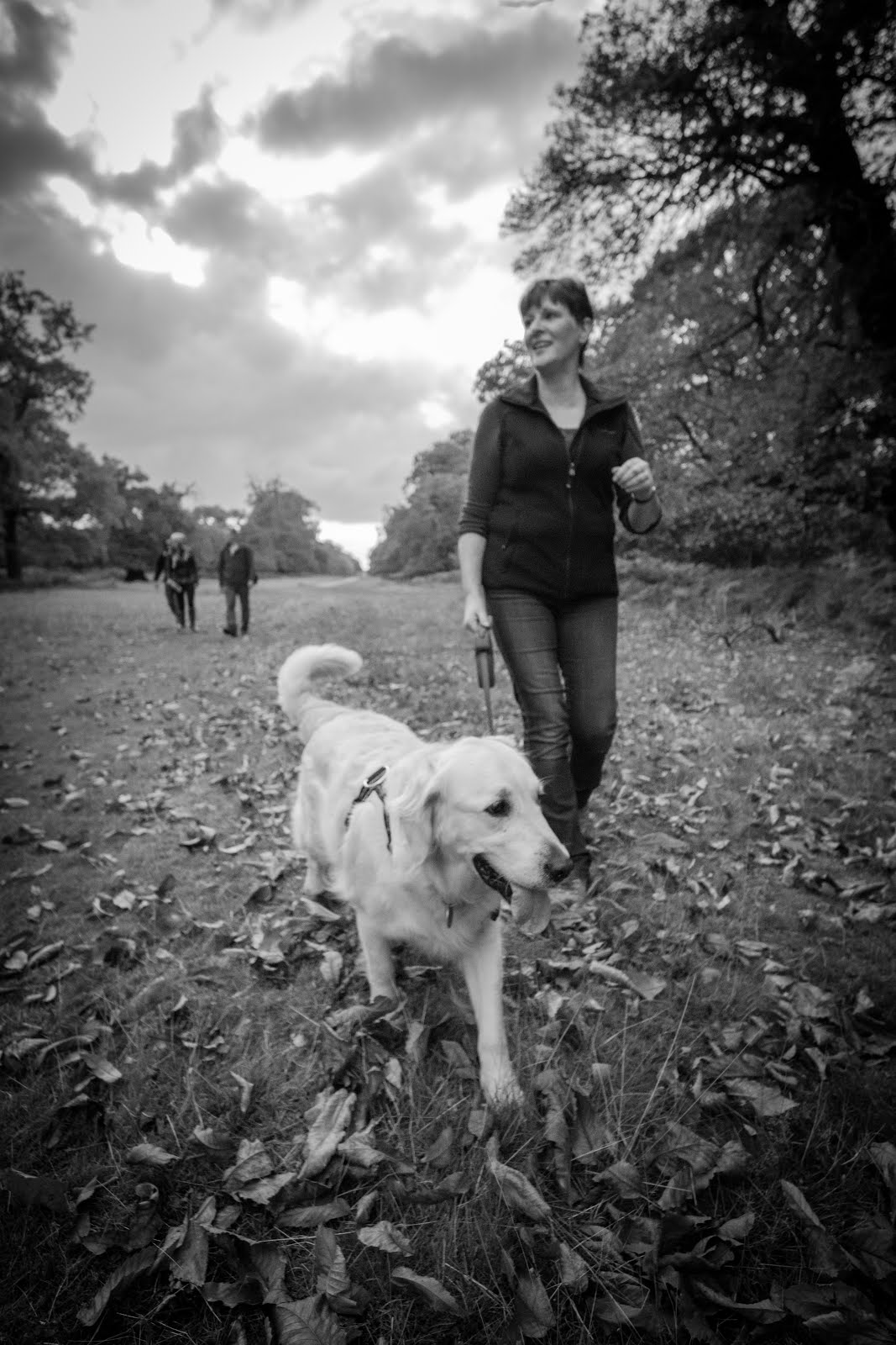 Autumn walk with Polly 2015