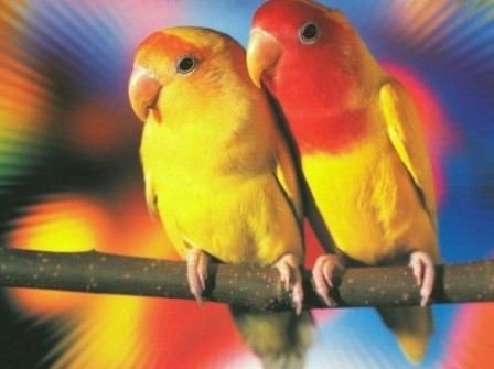 Beautiful Love Birds Wallpapers Free Love Birds Pictures Love